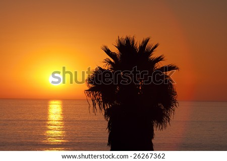 A glorious sunset with a palm tree over the Pacific Ocean. Note that a circle of lens flare highlights the tree. - stock photo