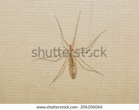 A gnat insect on a wall indoor
