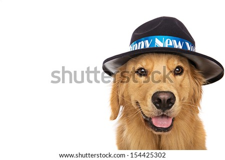 A golden retriever dog wearing a hat that says Happy New Year