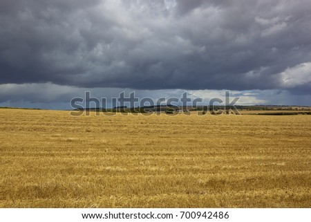 a golden straw stubble field with a farm on the horizon under a summer stormy sky in the yorkshire wolds
