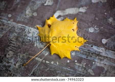 A golden yellow leaf sits on a picnic table in a Massachusetts park. - stock photo