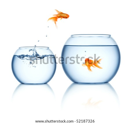 A goldfish jumping out of the fishbowl - stock photo