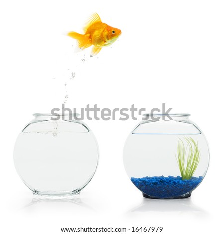 A goldfish leaping from a bare fishbowl to a more decorative one. - stock photo