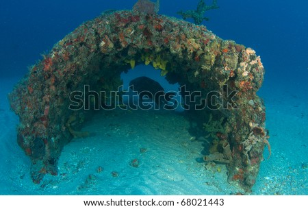 A Goliath Grouper hovering at the far end of a cement culvert of an artificial reef south east Florida. - stock photo