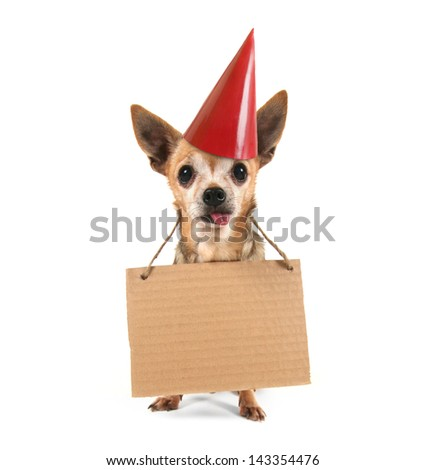a goofy chihuahua holding a sign with a birthday hat on - stock photo