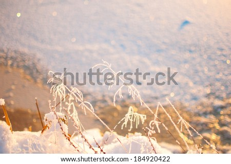 a Grass and ice, winter background, wallpaper. - stock photo