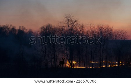 A grass fire at sunset, with a  silhouetted deer looking on, cautiously. - stock photo