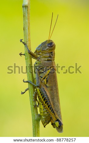 A grasshopper on a stem of a flower