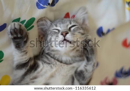 a gray cat / kitten sleeping - stock photo