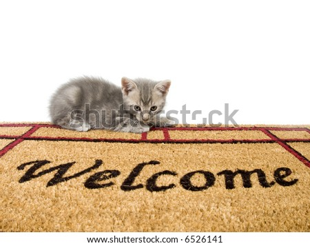 A gray kitten sits on a welcome mat on a white background