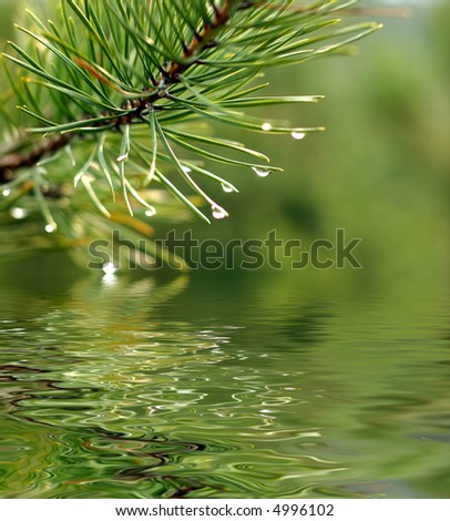 a green branch of pine-tree reflected in the water - stock photo