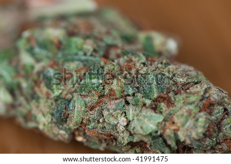 A green cannabis flower. - stock photo