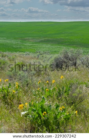 A green field bordered with a fence row with Bitter root - stock photo