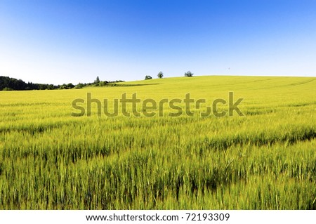 A green field in spring on a sunny day - stock photo