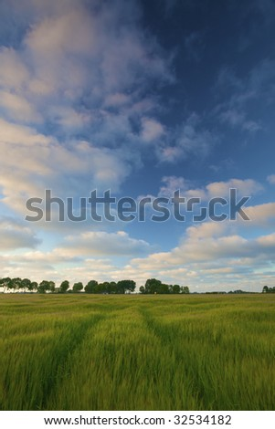 a green field of wheat in summer with a blue sky