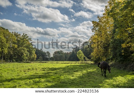 A green field within the forest, a lovely dark horse and an amazing cloudy blue sky. - stock photo