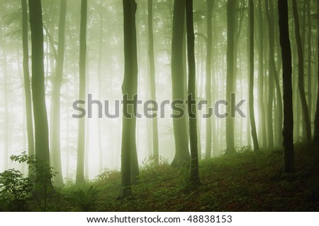 a green forest with fog at evening