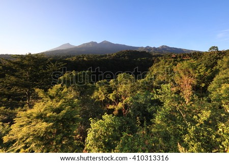 A green forest with view of Mount Rinjani, an active Volcano at Lombok, Indonesia.