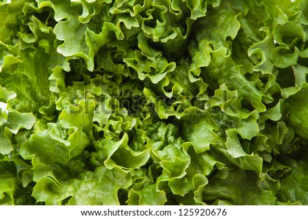 a green leaf of lettuce as background - stock photo