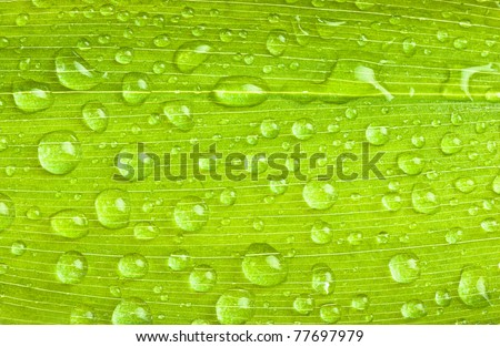 a green leaves with rain droplets - stock photo