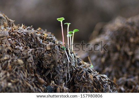 a green little tree on the ground - stock photo