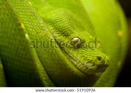 a green snake on the hunt - stock photo