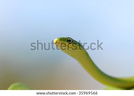 A green snake with a light blue sky background. - stock photo