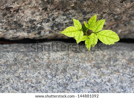A green tree sprout growing between granite stairs - stock photo