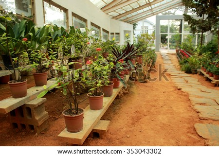 A greenhouse with several plants