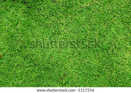 A greeny grass - stock photo