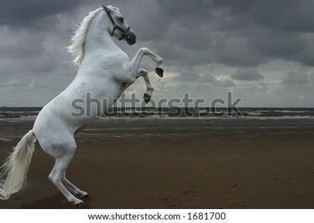 A grey arabian horse rearing on a beach.  Photomanipulation. - stock photo