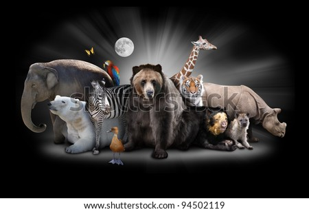 A group of animals are grouped together on a black background with glowing white rays. Animals range from an elephant, zebra, bear and rhino. Use it for a zoo or friends concept. - stock photo