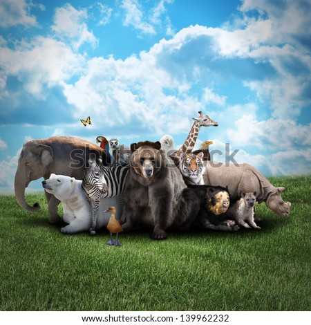 A group of animals are together on a nature background with text area. Animals range from an elephant, zebra, bear and rhino. Use it for a zoo or conservation concept. - stock photo