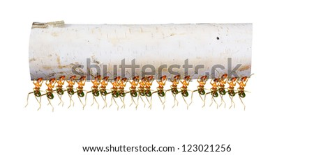 A group of ants carry the wood - stock photo