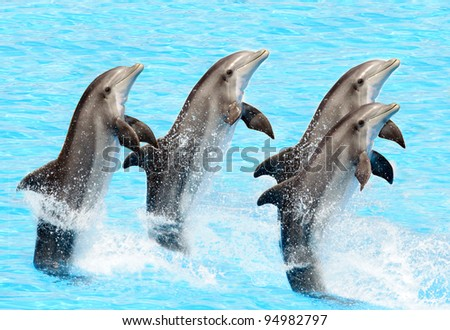A group of bottlenose dolphins performing a tail stand - stock photo