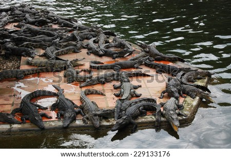 A group of crocodiles is resting and sunbathing near the water - stock photo