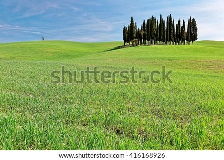 A group of cypress trees standing on the rolling hills of green grassy fields under blue sunny sky in Val d'Orcia near San Quirico, Siena, Italy ~ Typical spring scenery of idyllic Tuscany countryside - stock photo