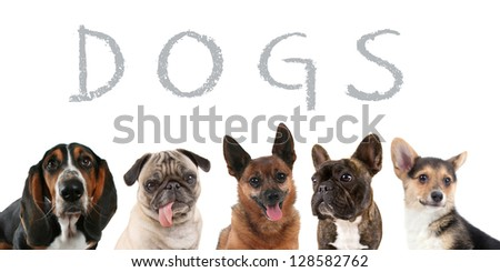 a group of dogs - stock photo