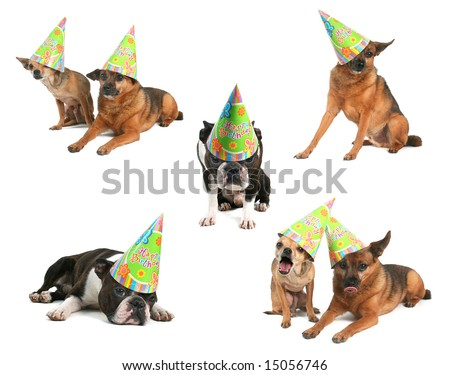 a group of dogs with birthday hats on - stock photo