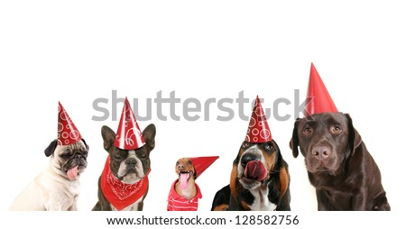 a group of dogs with party hats on - stock photo