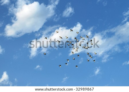 A group of doves soaring freely in the sky. - stock photo