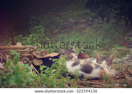 a group of feral lazy sleepy cats are sleeping outside the garden - stock photo
