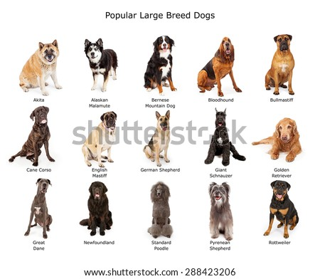 Dog breeds stock images royalty free images vectors for Different types of puppies breeds