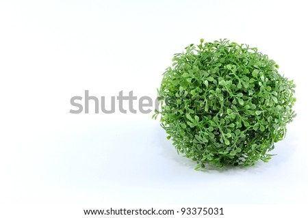 a group of green plant - stock photo