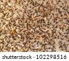 a group of insect dead - stock photo