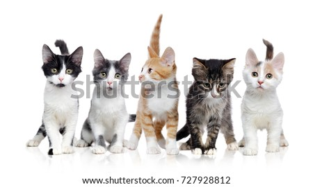 A group of kittens of different breeds  in a raw on a white background