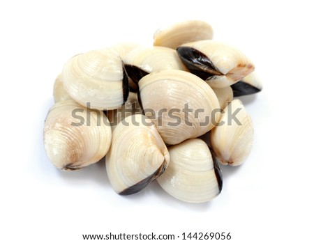 a group of live clam  on white - stock photo