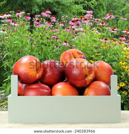 a group of nectarine in crate on the table - stock photo
