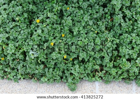 a group of plants and leaves with calendula. Green leaves wall background - stock photo