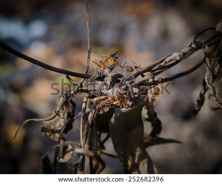 A group of red ants on tree - stock photo